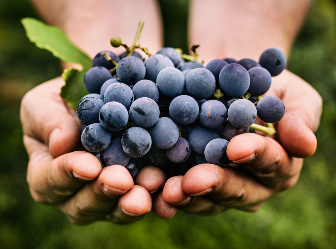 Hållbar odling Viva Wine Group