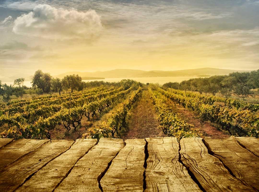 vinodling kalifornia