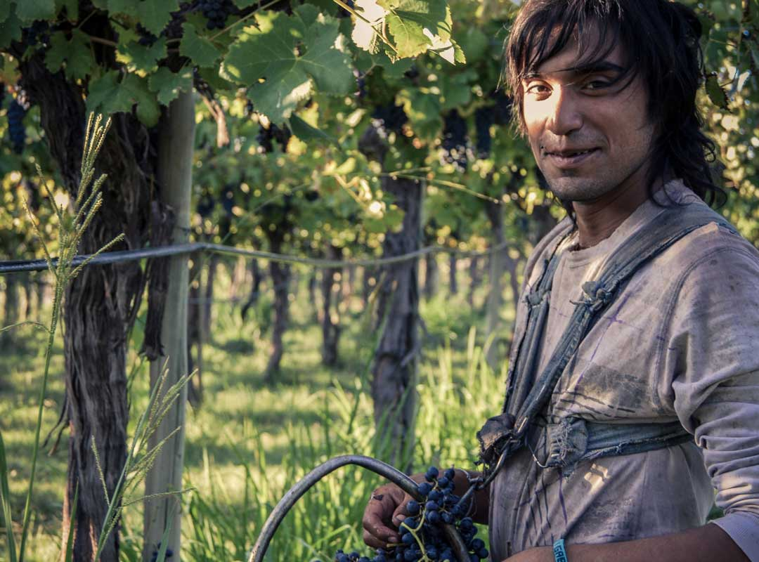 worker in sustainable viticulture
